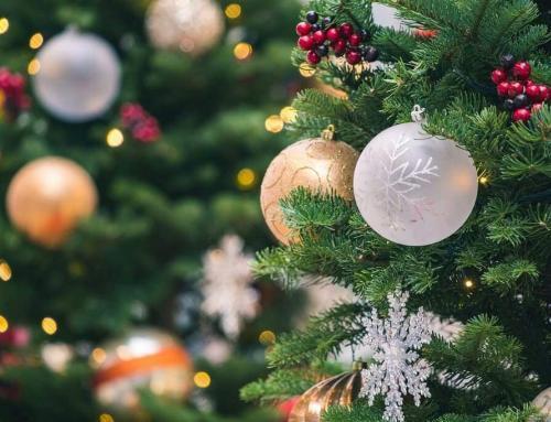 Den richtigen Weihnachtsbaum finden und wie man ihn frisch hält